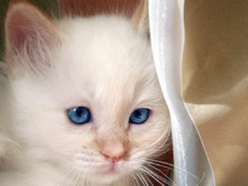 L tre humain et l animal blogue de via capitale - Loi sur les chats et le voisinage ...