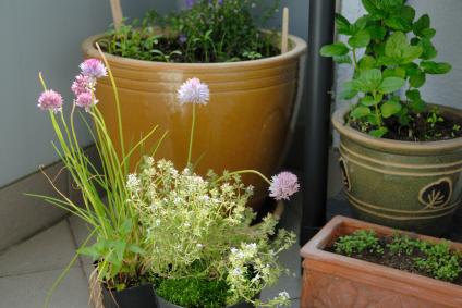 Herbes aromatiques ISTOCKPHOTO art-de-vivre