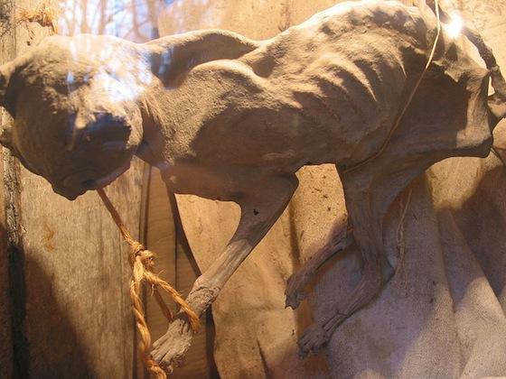 Une cole dans le jardin des morts blogue de via capitale - Saint maclou tapijt van gang ...
