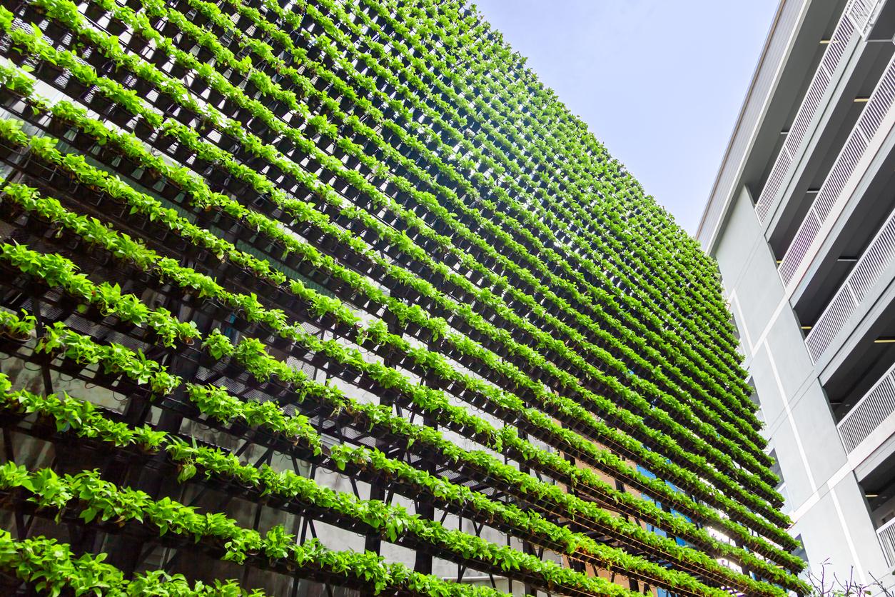 mur végétal exterieur - environnement - Via Capitale