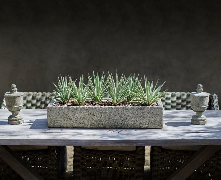 cour terrasse plante pot
